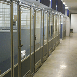Almost-Home-Animal-Shelter_Interior